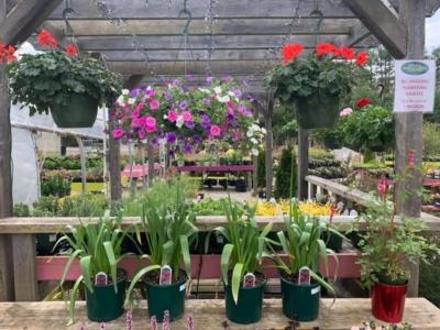 diroma greenhouse